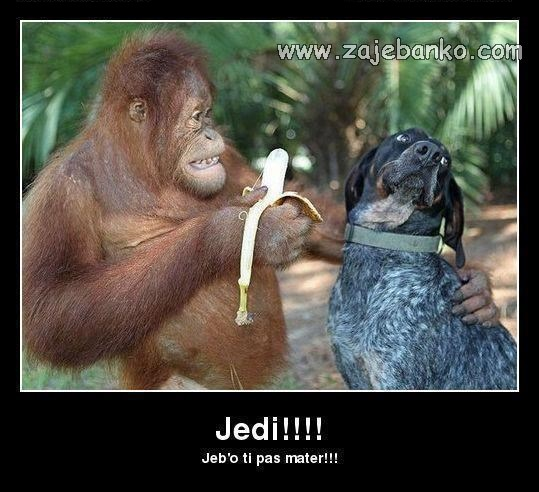 Životinje smijeh - majmun i pas