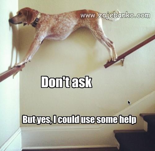 Životinje smijeh - pas zaglavio i treba pomoć