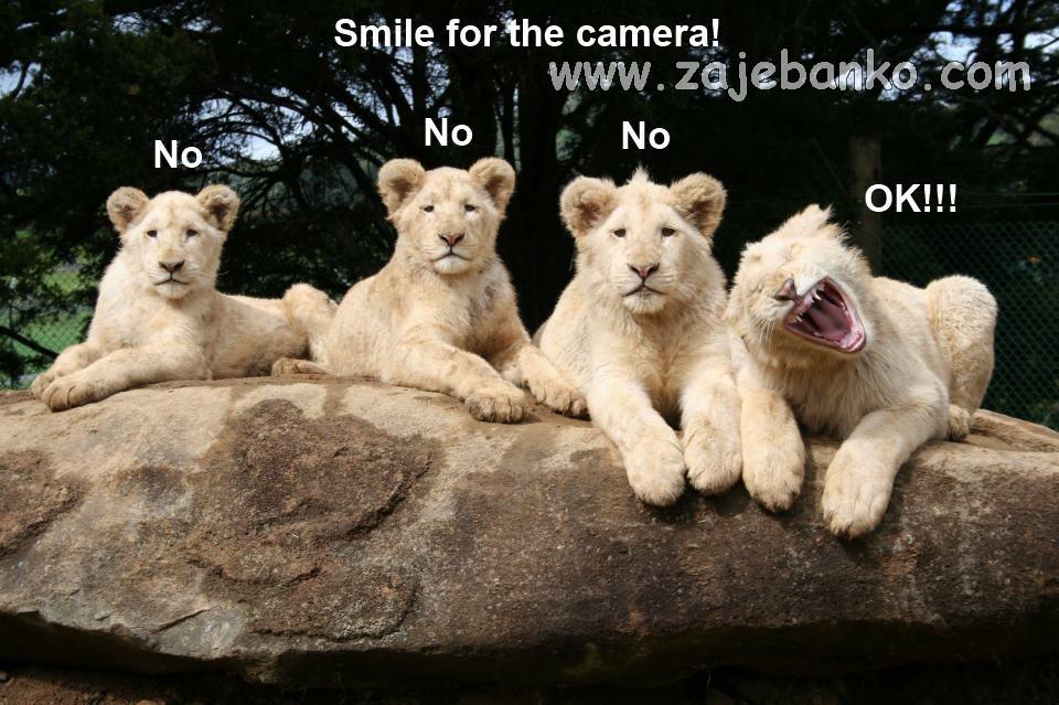 Životinje smijeh - slatki lavići