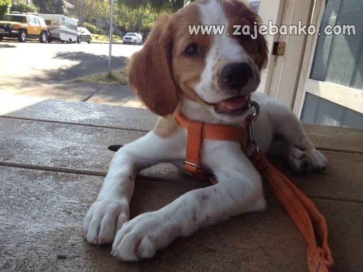 Životinje smijeh - sladak štenac