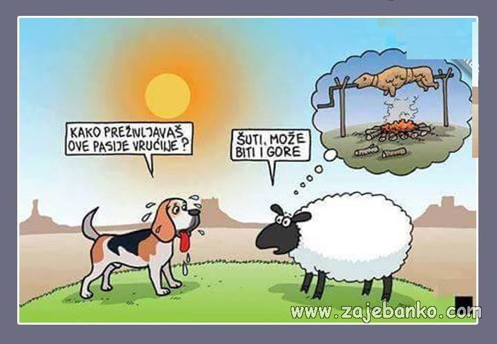 Životinje smiješne slike - pasje vrućine