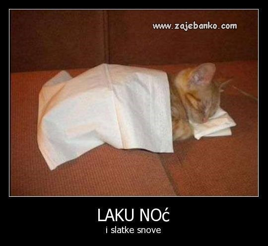Životinje smiješne slike - mala maca spava