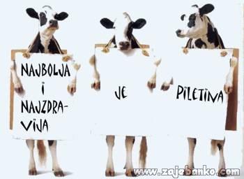 Životinje smiješne slike - krave