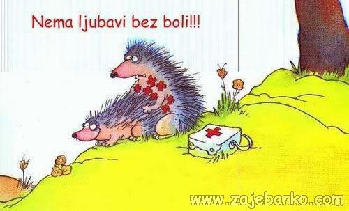 Životinje smiješne slike - ljubav ježica i jež
