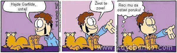 Životinje smiješne slike - lijena mačka