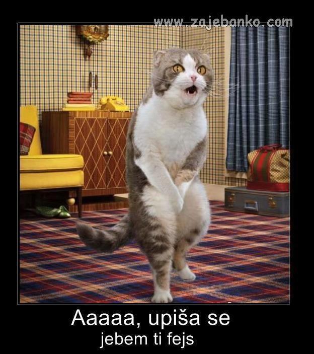 Životinje smiješne slike - mačka