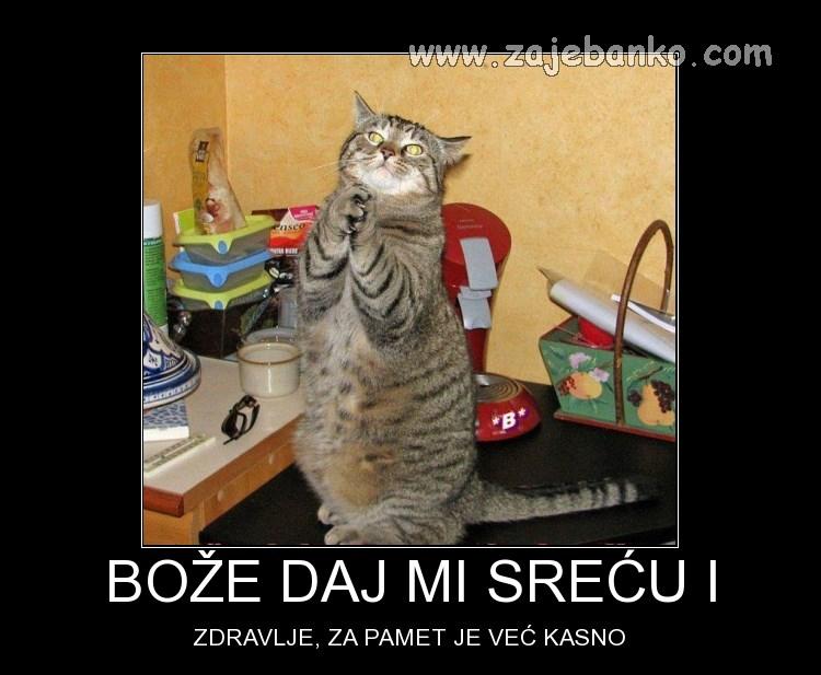 Životinje smiješne slike - mačka moli