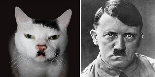 smiješne mačke koje sliče na nekoga ili nešto