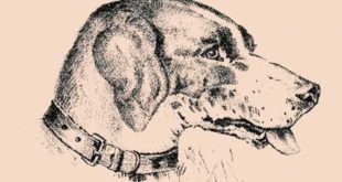 zagonetan pas skriva vlasnika - pronađi skriveno lice