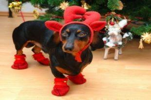 Životinje u božićnom izdanju