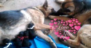 Životinjska ljubav i nježnost: životinje se vole
