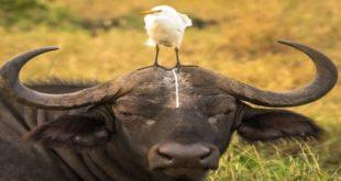 životinje ispadaju pravi kreteni