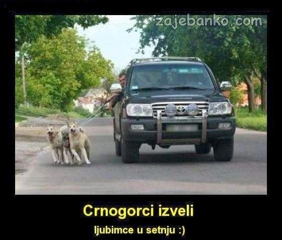 crnogorski psi u šetnji