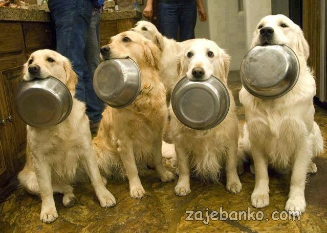 gladni psi smiješna slika