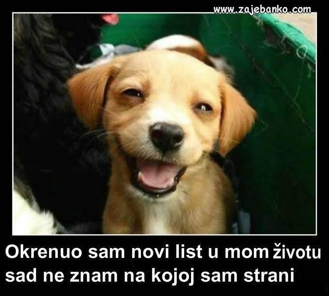 izgubljen pas smijesna slika