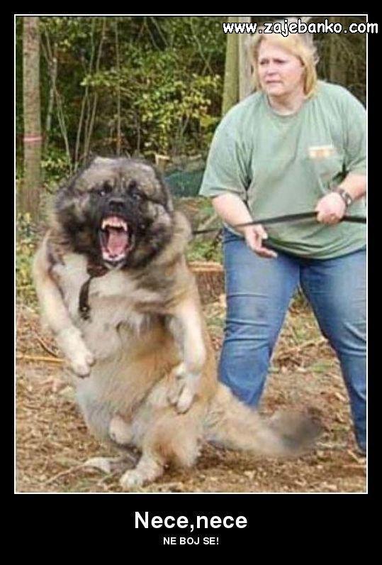 jako oštar pas