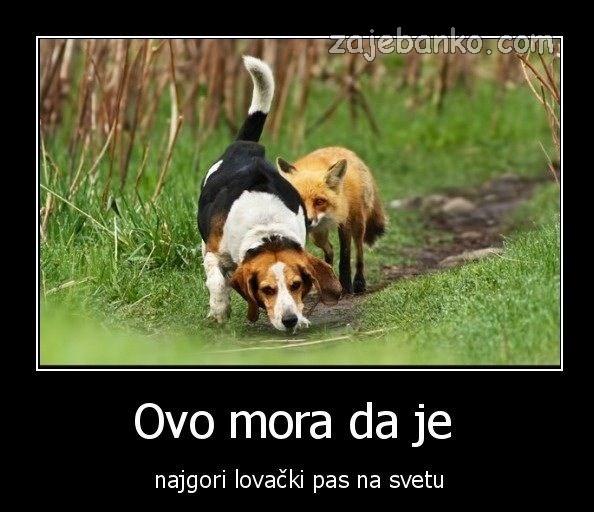 najgori lovački pas na svijetu