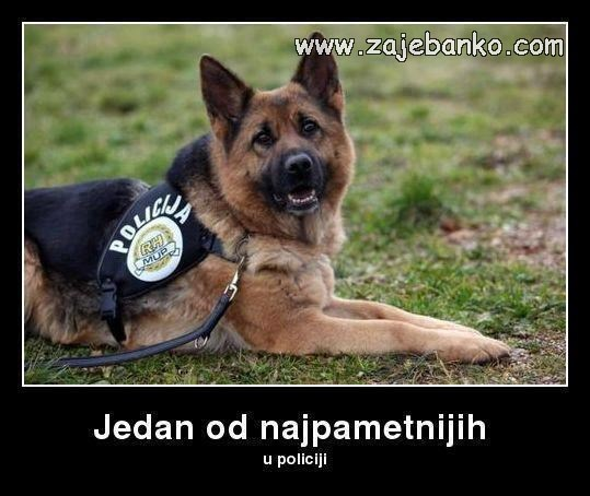 najpametniji pas u policiji