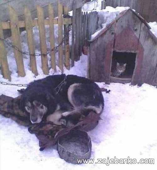 pas izvan kućice