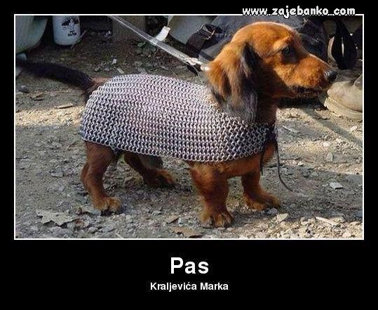 pas kraljevića marka