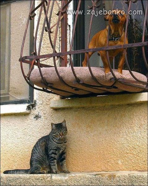 pas na balkonu smiješna slika