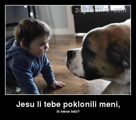 pas na poklon smiješna slika