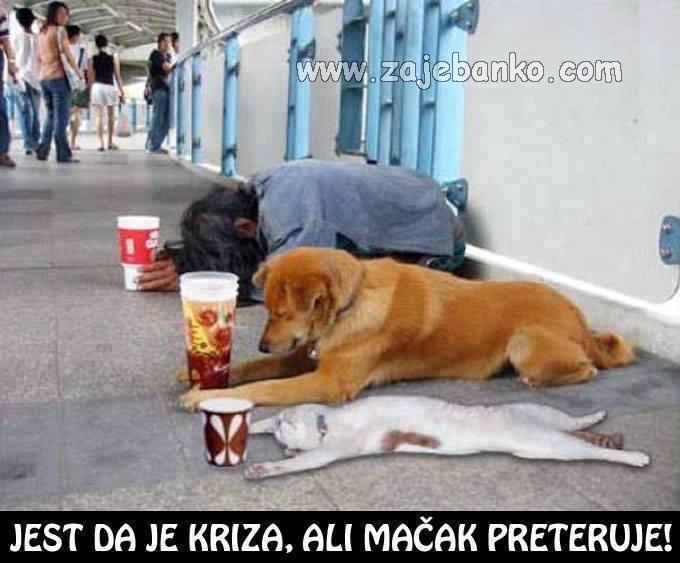 pas prosi na ulici