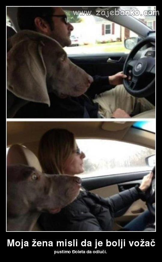 pas u strahu smiješna slika