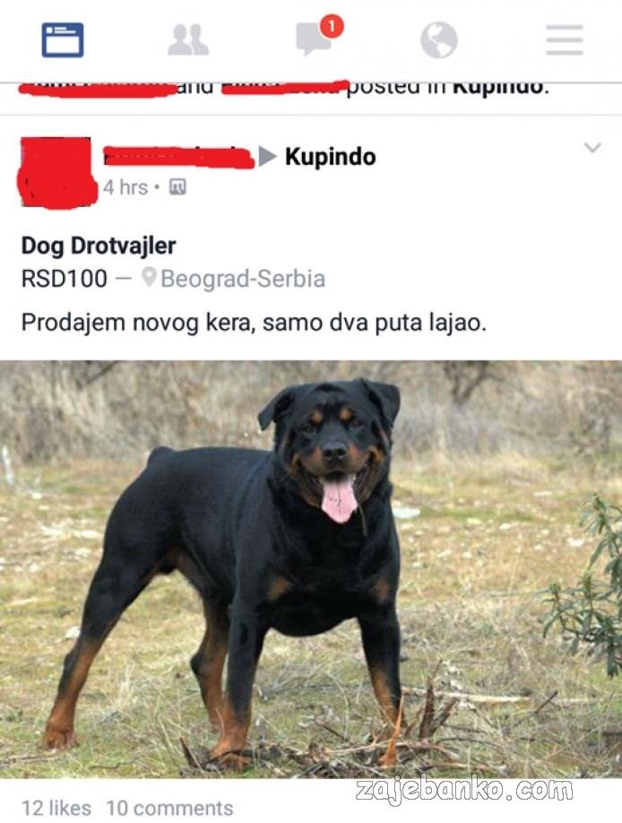 prodajem psa rotvajlera smiješna slika