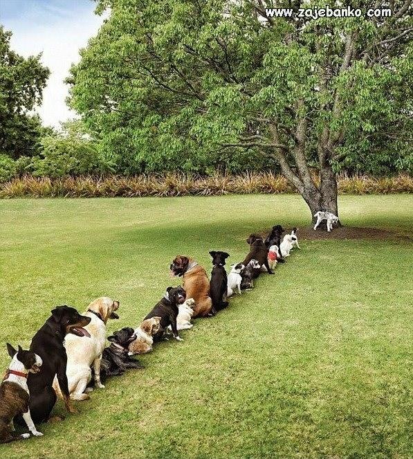 psi čekaju svoj red