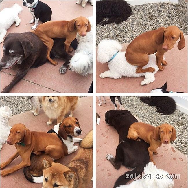 psi kreteni