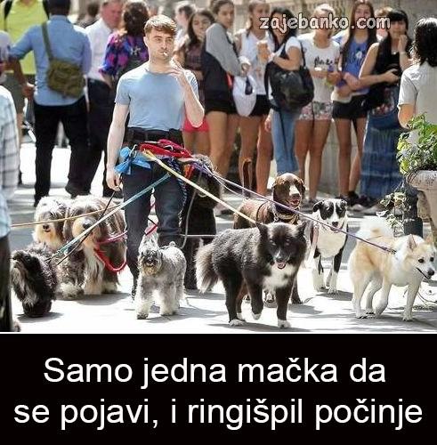 psi u šetnji humor