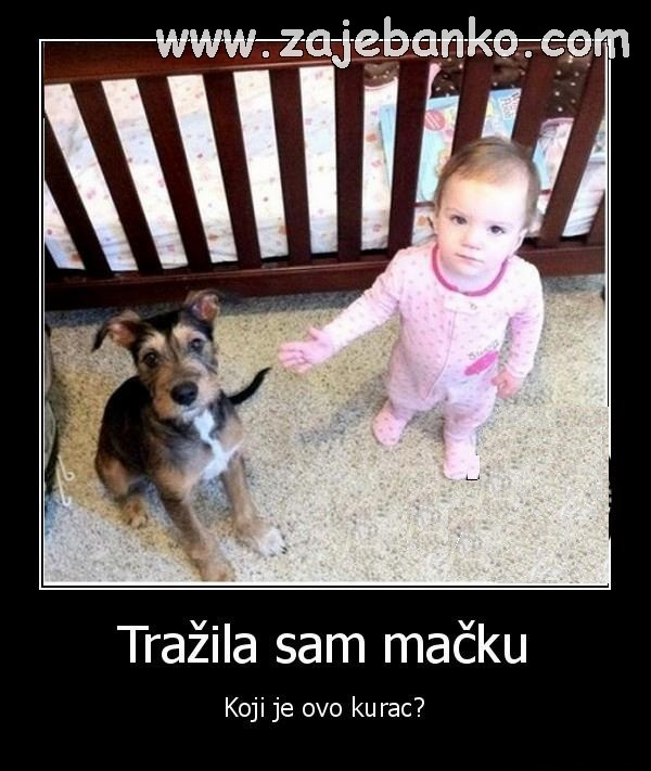simpatičan mali pas