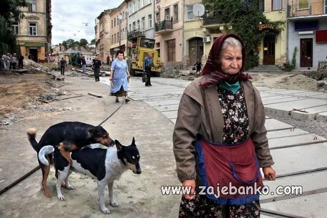 smiješne slike pasa - ulični psi