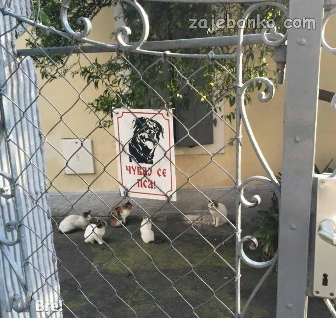 smiješne slike pasa - nema psa u dvorištu