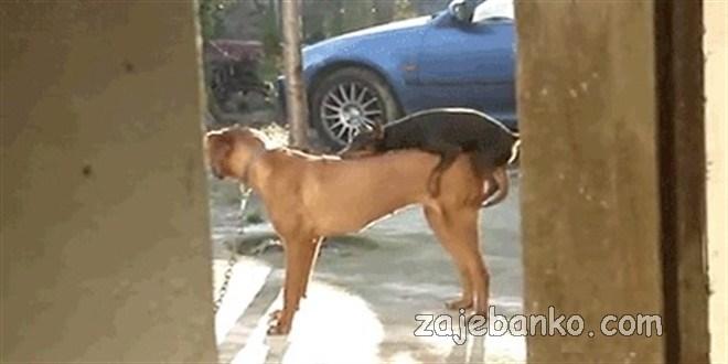 velike želje malog psa - mali & celiki cucak