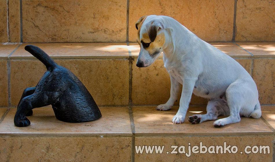 zbunjen mali pas